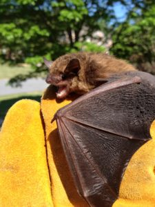 Jasper Bat