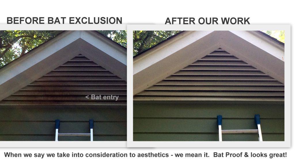 Bat Exclusion